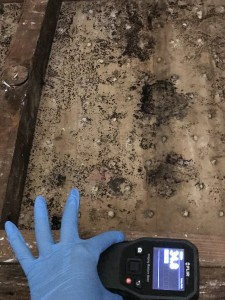 Mold Inspection in Los Angeles and the surrounding area